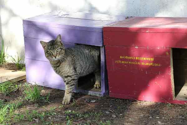 Bayraklı Belediyesi Sahipsiz Sokak Hayvanlarına Sahip Çıkmaya Devam Ediyor | DOSYA & HABER