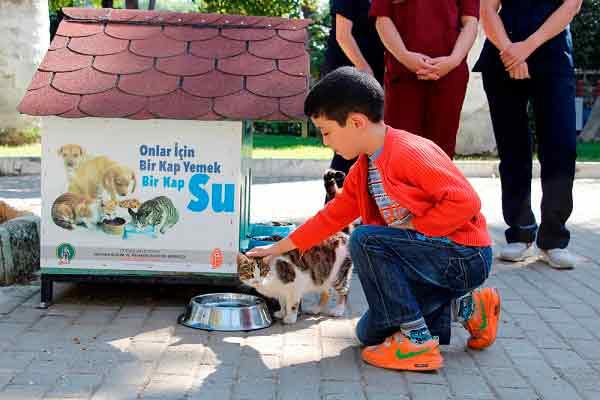 Sokak Hayvanlarına Beslenme Noktaları Oluşturuldu | DOSYA & HABER