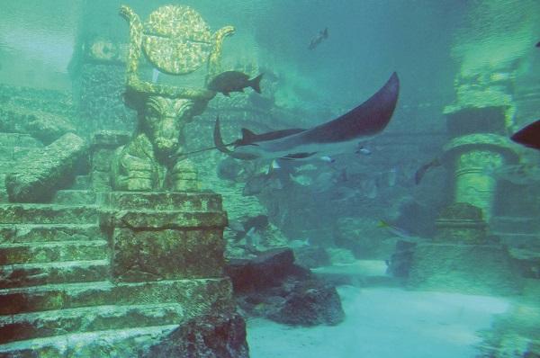 Ege Life | Mutlaka Görmeniz Gereken Su Altı Seyahati Noktaları