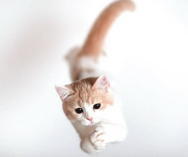 Ege Life | Kedi ve Köpeklerde Epilepsi