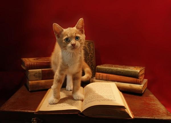 Ege Life | Kedi Tüyü Alerjisi ve Alerji Yapmayan Kedi Türleri