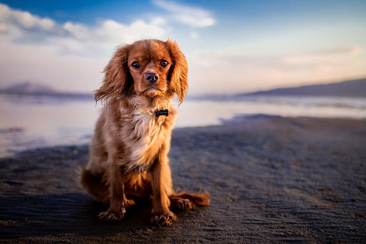 Ege Life | Köpeklerimiz için Büyük Tehlike: LEISHMANIASIS