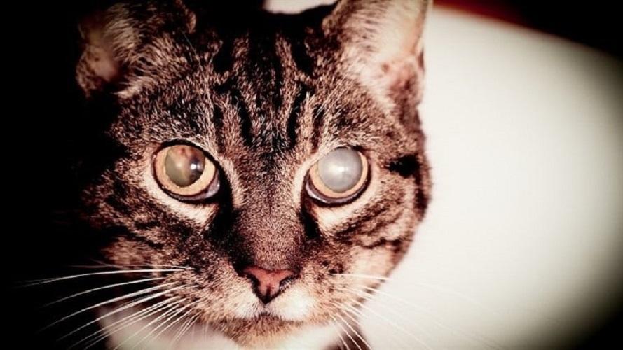 Ege Life | Kedi ve Köpeklerde Katarakt