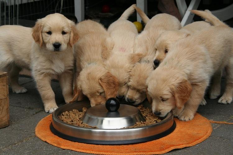 Ege Life   Köpeğimi Nasıl Beslemeliyim?