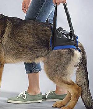 Ege Life | Köpeklerde Kalça Displazisi
