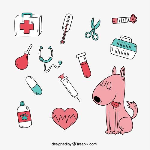 Ege Life | Kedi ve Köpeklerde Uyuz Hastalığı