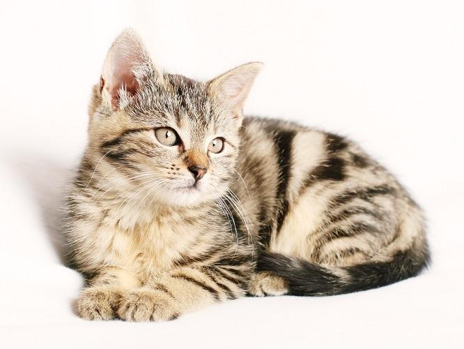 Ege Life | Kedi ve Köpeklerde Kulak Problemleri