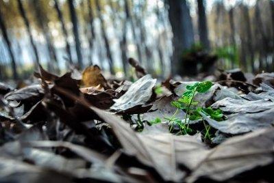İyi Fotoğraf Çekmenin 5 Yolu | DOSYA & HABER