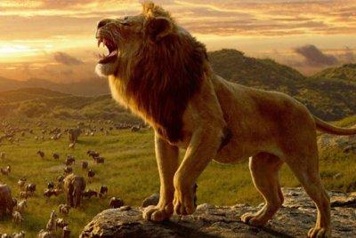 Aslan Kral (THE Lıon Kıng)  2019 | DOSYA & HABER
