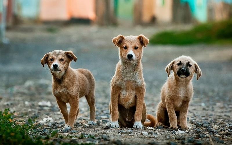 AİLE & EVCİL DOSTLARIMIZ |  || Köpekler Hakkında Doğru Bilinen 9 Yanlış