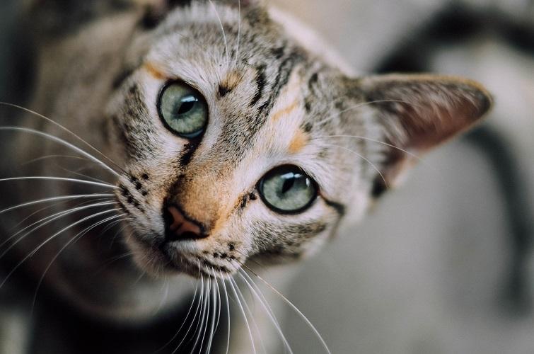 |  || Kedi ve Köpeklerde Katarakt