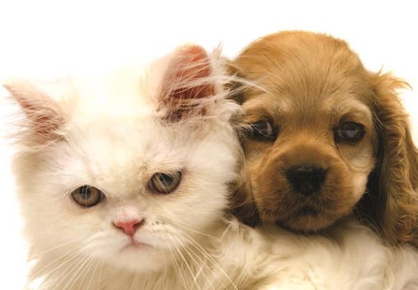 |  || Kedi ve Köpeklerde Epilepsi