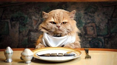 |  || Kedi ve Köpeklerde Obezite Sorunu