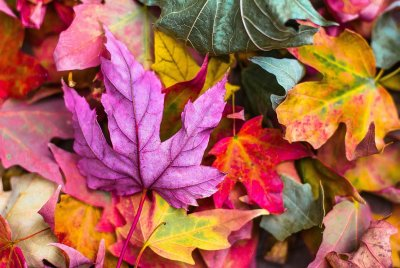 Sonbaharda Fotoğraf Çekmenin Püf Noktaları | DOSYA & HABER