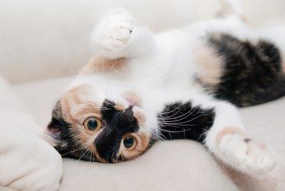 Kedi ve Köpeklerde Hidrosefali | AİLE & EVCİL DOSTLARIMIZ