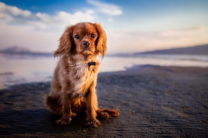 AİLE & EVCİL DOSTLARIMIZ |  || Kedi ve Köpeklerde Endoprotezler