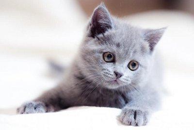 Küçük Hayvan Hekimliğinde Kırık Tedavileri | AİLE & EVCİL DOSTLARIMIZ